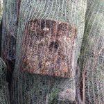 sapins de noël français - pépinière grange - conditionnement