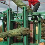 sapins de noël français - pépinière grange - mise sous filet