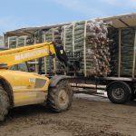 sapins de noël français - pépinière grange - chargement camion